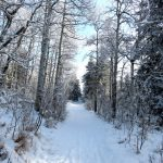 A winter scene, Trail 4, J.J. Collett Natural Area, AB, Photo submitted by: Charles Bird. Photographed by: Charles Bird.