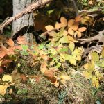 Fall colours…...Submitted by: Roger S……Photographer: Roger S……Sept. 11, 2011