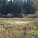A Marsh…..Photographer: Charles D. Bird…..Oct. 12, 2013