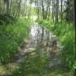 Some wet trails…...Submitted by: Roger S. …….Photographer: Roger S……July 14, 2010