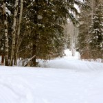 Trails…..Submitted & Photographed by: Kelly B…..March 29, 2014