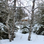 Winter Perspective…..Submitted & Photographed By: Kelly B…..March 29, 2014