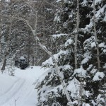 Winter Grooming…..Submitted & Photographer: Kelly B….March 29, 2014