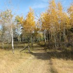 Fall colors on trail 3…..Submitted by: Charles D. Bird…..Photographer: Charles D. Bird…..Sept. 22, 2012